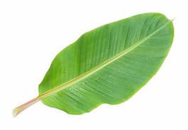banana leaf